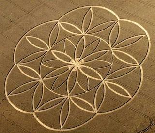 Crop Circle 16